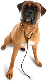 veterinarian in Barrie